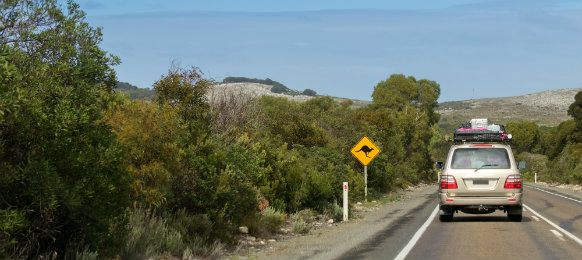 Driving a car hire on Cape du Couedic road on Kangaroo Island, South Australia