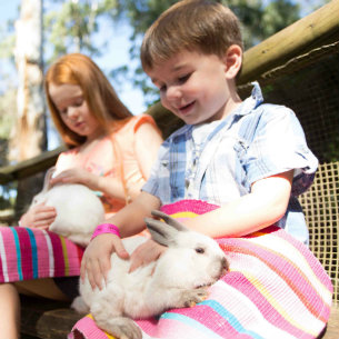 Rabbit petting at The Macadamia Castle and Animal Park