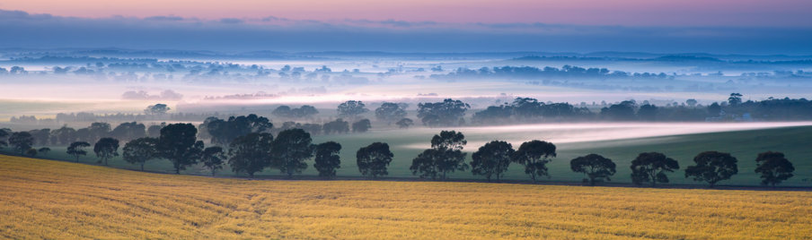 valley mist in south australia