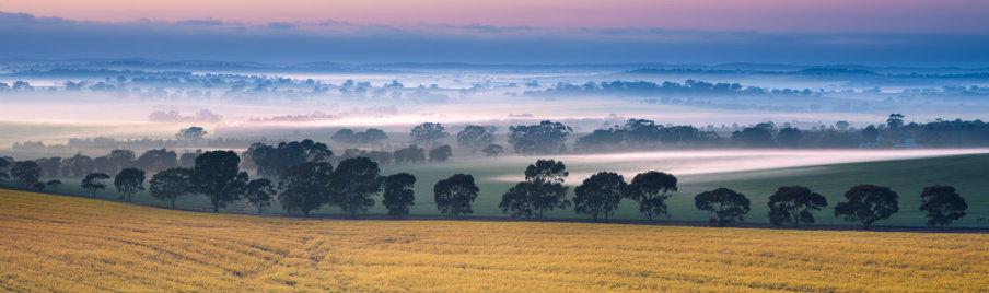 valley mist in south australia