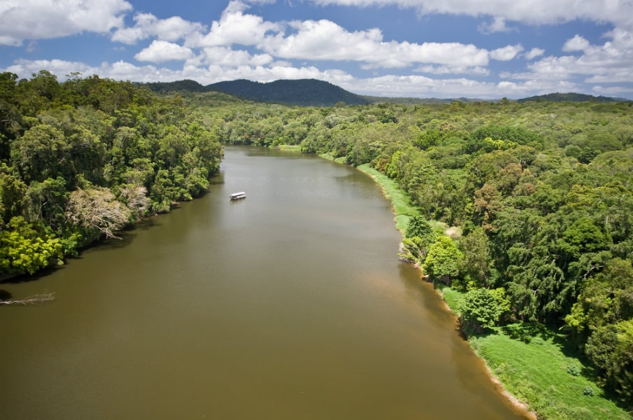 Aerial view of daintree river