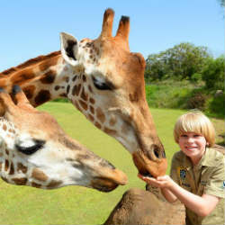 giraffes in australia zoo with robert irwin