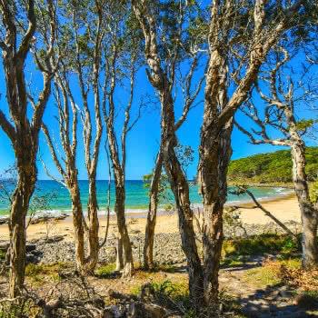 beach at noosa national park