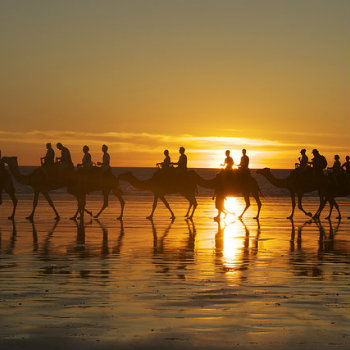 Camels passing in the Cable beach while sunset, Broome