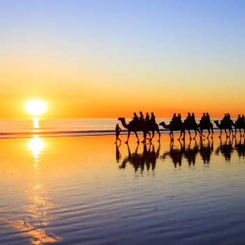 camels walking along cable beach at sunset, broome