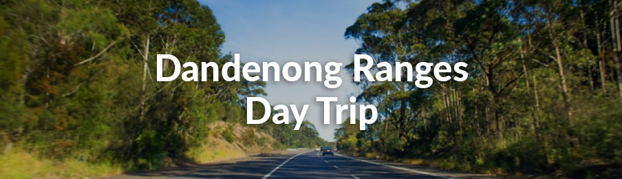 dandenong ranges day trip