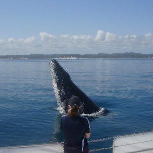 Freedom Whale Watch