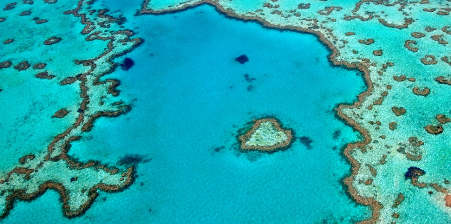 heart reef whitsunday