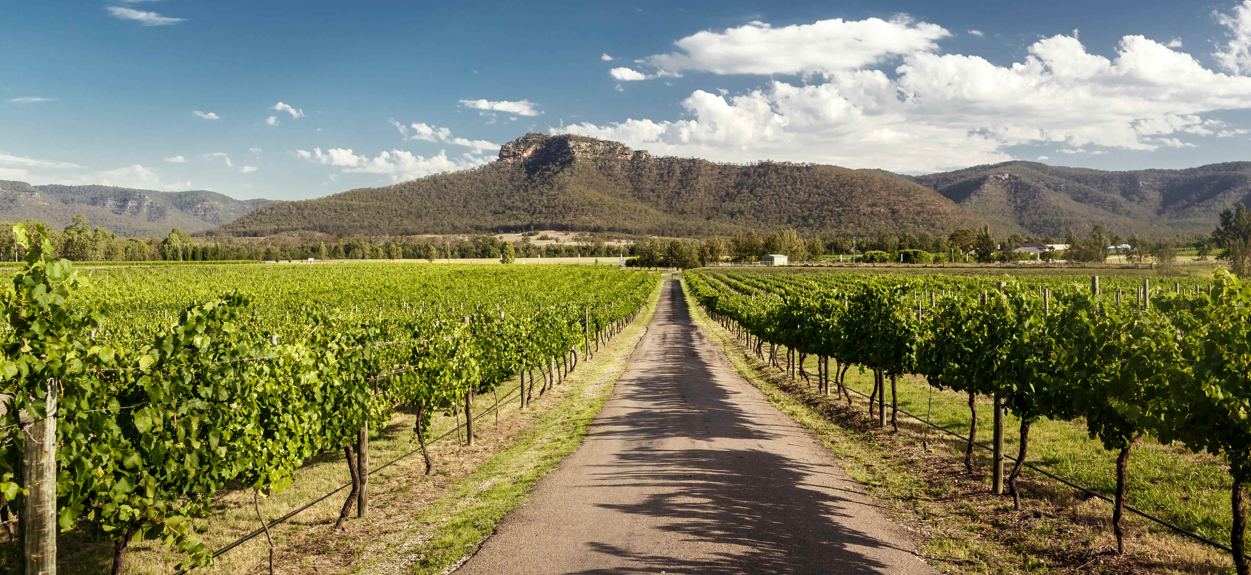 Hunter Valley Bus Tours