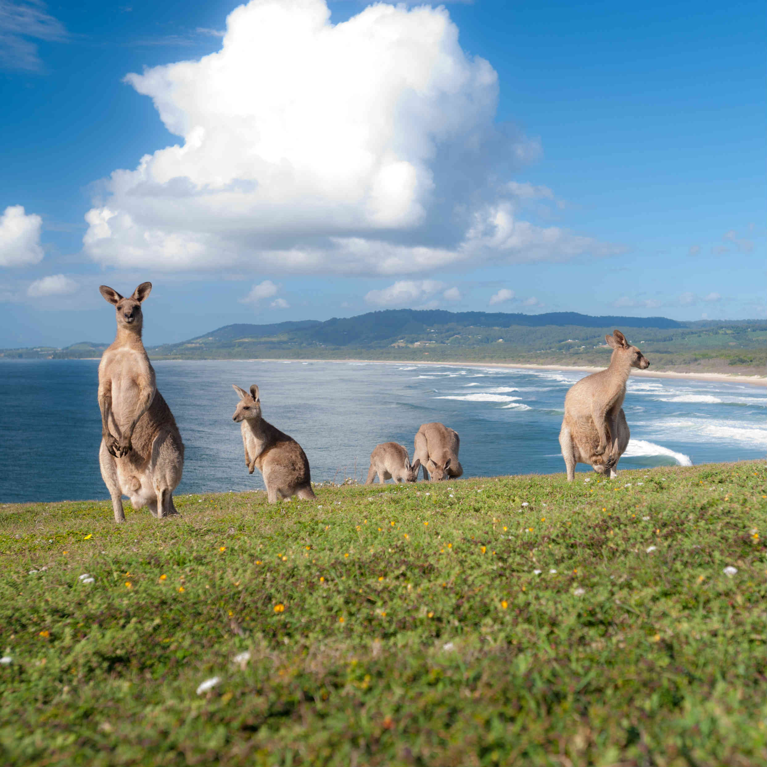 Kangaroo Island: Fun Spring Activities In Australia