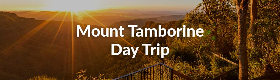 mount tamborine day trip
