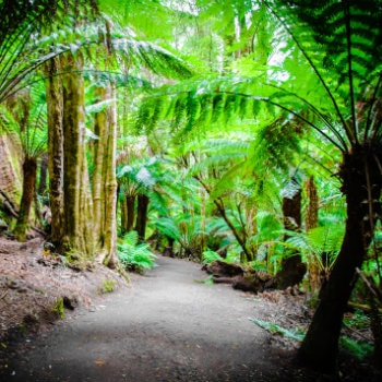 Great Otways rainforest trail
