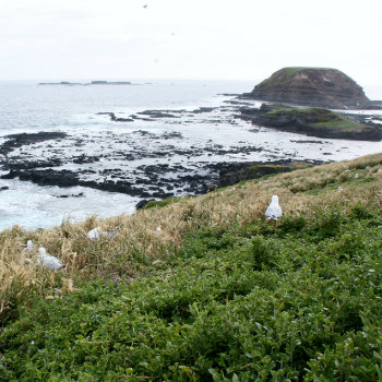 rugged coastlineview of phillip island