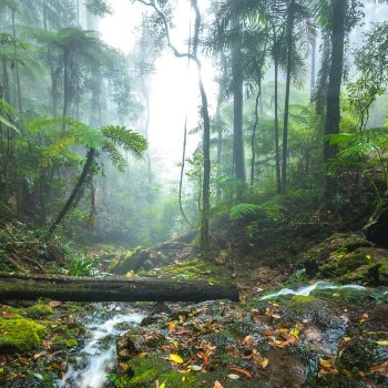twin falls hike in springbrook national park