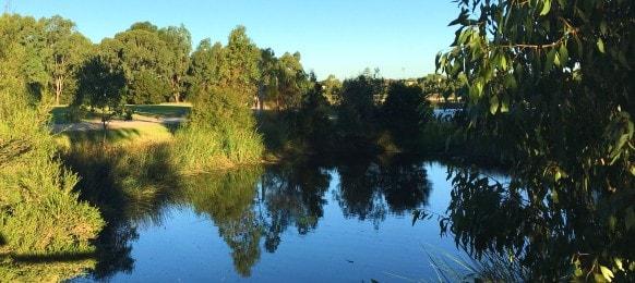 wetlands at namatjira park clayton, victoria