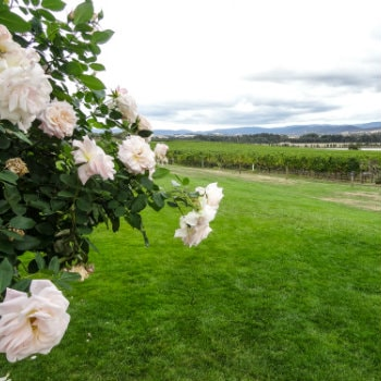 Yarra Valley winery and gardens